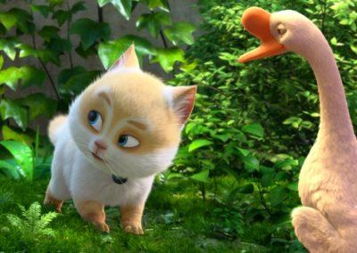 cats_12_800